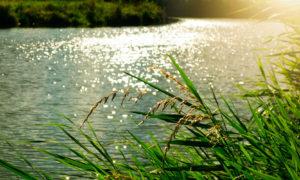 Herbes folles devant l'eau