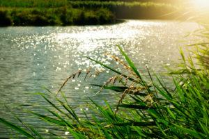 Herbes folles devant un plan d'eau